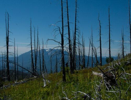 Morice Mountain – The Swiss Fire