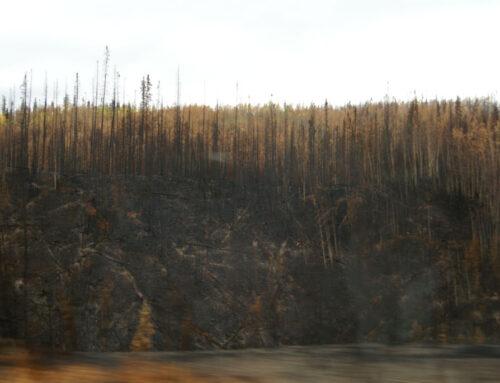 Op de Cassiar Highway